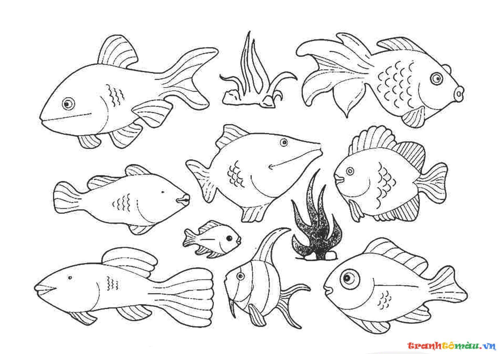 Tổng Hợp Những Bức Tranh Tô Màu Con Cá Siêu đẹp Cho Bé Phú