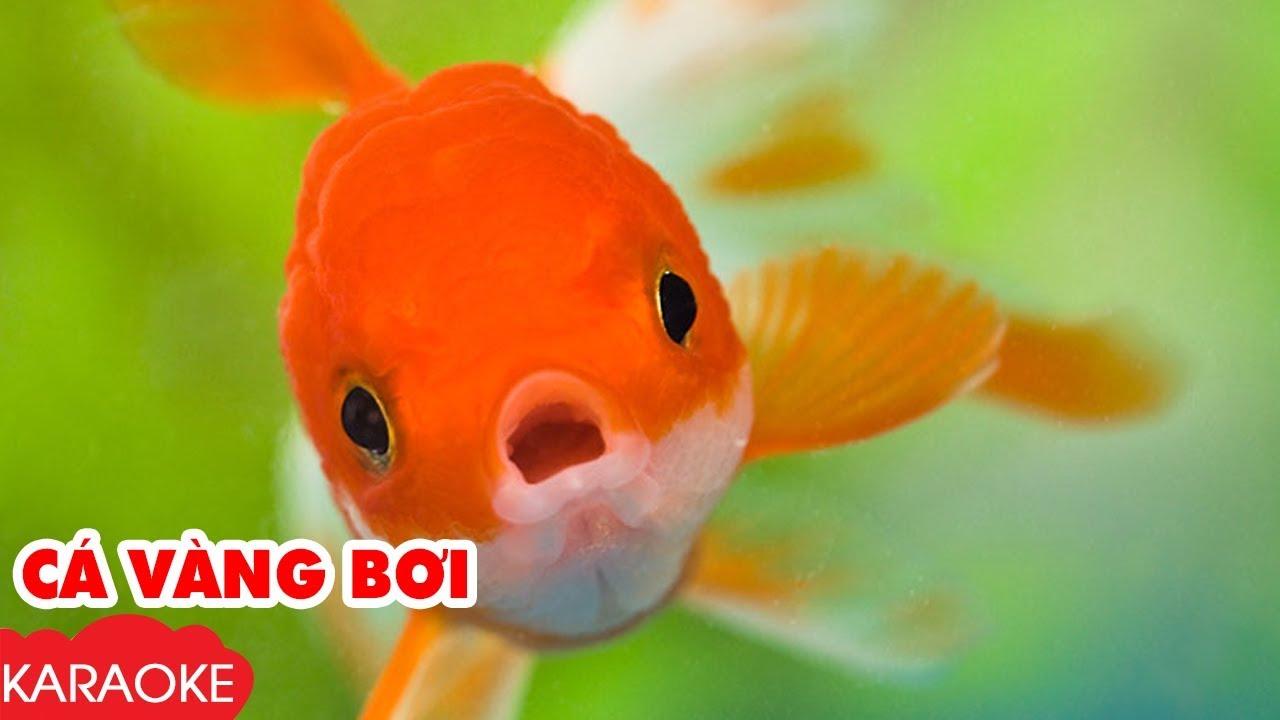 Giáo án dạy hát cá vàng bơi – Giáo dục phát triển tài năng